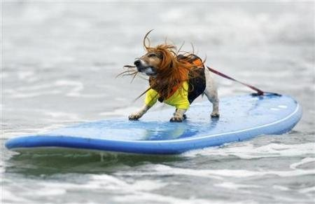 dog surfing rocks!