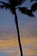 Rock Climbing Photo: Palm tree at sunrise