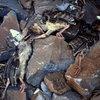 The three dead turkeys. J. Haisley photo