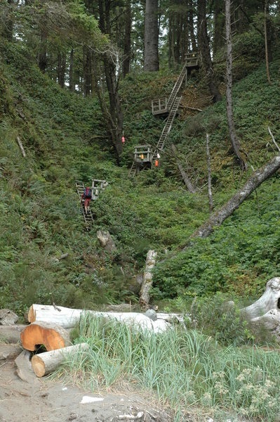 It may be a hike along the coast, but you get plenty of vertical on the West Coast Trail.