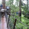 The suspended walkways at the Capilano Suspension Bridge in North Vancouver.