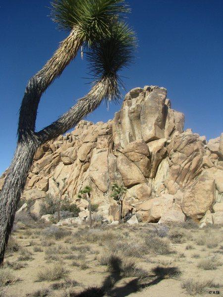 Rock Climbing Photo: Banana Cracks