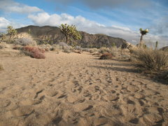 Rock Climbing Photo: The sandy wash on the approach to the Asteroid Bel...