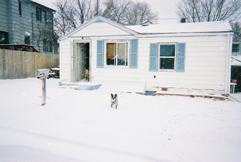 Our Home (the dog patch)