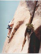 Rock Climbing Photo: Forbidden Paradise (1991)