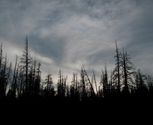 Rock Climbing Photo: The ghost forest on the way to McLeod Lake, Mammot...