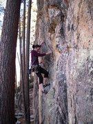 Rock Climbing Photo: Leading Tree Wing Circus