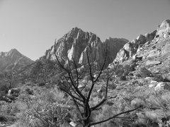 Rock Climbing Photo: The Juniper canyon area