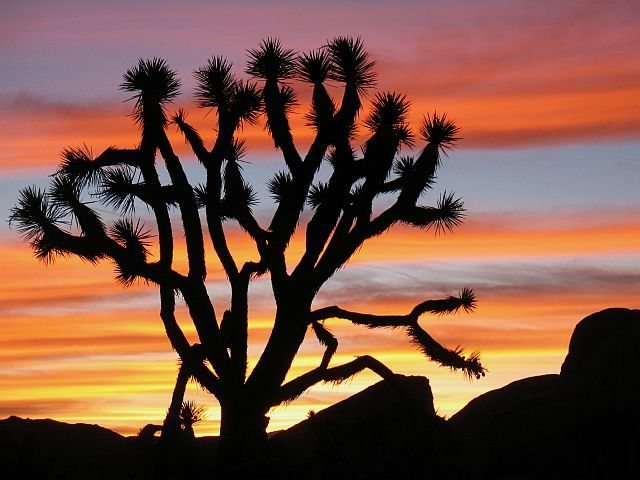 Joshua Tree sunset from Hall of Horrors, Joshua Tree NP