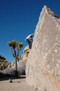 Rock Climbing Photo: The Wedge boulder, Turtle Rock Circuit. Joshua Tre...