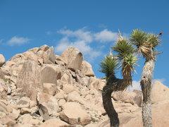 Rock Climbing Photo: Looking up at the Human Sacrifice Boulder, Joshua ...