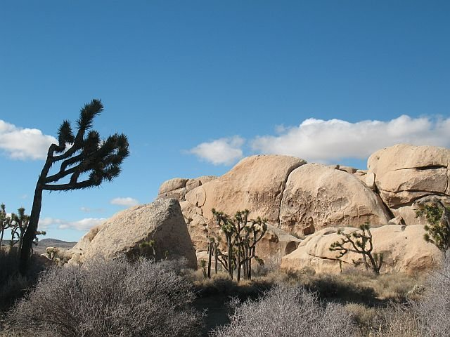 The right side of the Hall of Horrors - West Wall (East Face), Joshua Tree NP <br>