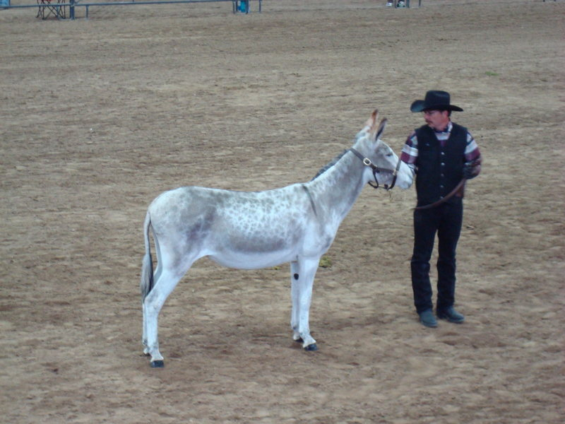Candy...the do-it-all donkey!