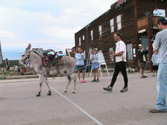 Rock Climbing Photo: Guinness, the racing burro at the finish of the 29...