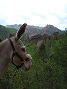 Rock Climbing Photo: Ass & crags ... Lost Creek 2008
