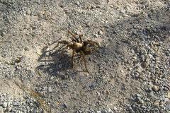 Rock Climbing Photo: visitor center fauna