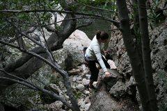 Rock Climbing Photo: Heading toward first bold on Monkey Mahem