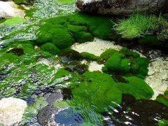 Rock Climbing Photo: Moss and stream detail, Ishinca Valley