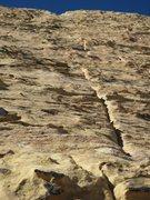 Rock Climbing Photo: Sunflower p4.