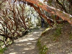 Rock Climbing Photo: Hiking through the Quenal Forrest.