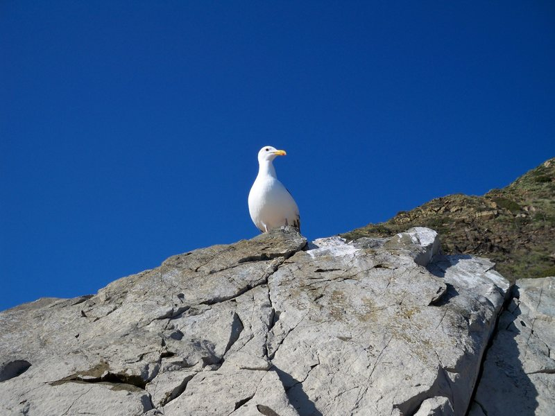 A seagull on top of the Mugu boulder.