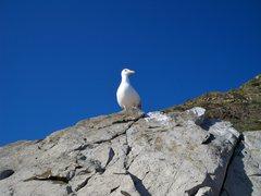 Rock Climbing Photo: A seagull on top of the Mugu boulder.
