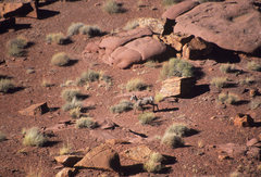 Rock Climbing Photo: I've climbed here twice and both times bighorn she...