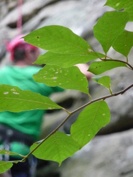 Climbing at Jackson Falls.