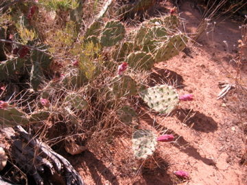Rock Climbing Photo: cacti!