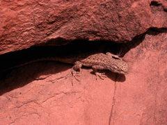 Rock Climbing Photo: leeeetle leeeezard