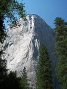 Rock Climbing Photo: Looking up at El Cap from the valley floor.