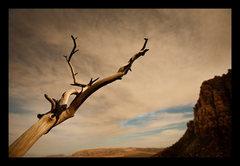 Rock Climbing Photo: Burned bush tells all.