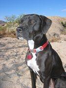 Rock Climbing Photo: One sweet puppy!
