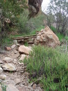 Rock Climbing Photo: After the ladder, the trail leading up to the tunn...