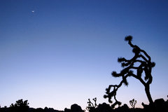 Rock Climbing Photo: Joshua Tree National Park