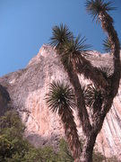 Rock Climbing Photo: Cool palm tree shot
