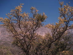 Rock Climbing Photo: Spring plant life