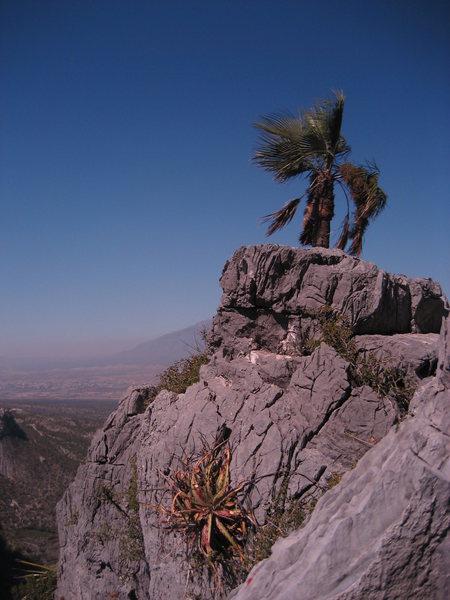 Palm tree summit on Estrellita