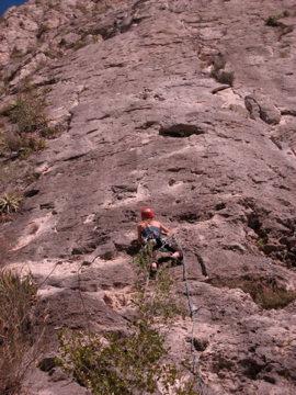 Rock Climbing Photo: Cacctus Pile