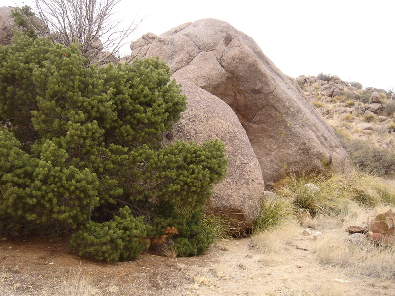 The Particularly Nice One Boulder. Personally I think the tree is the reason the Boulder is named such