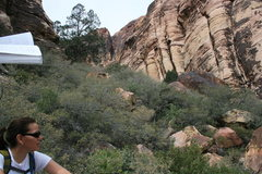 Rock Climbing Photo: Agina just down canyon from Brownstone Wall.