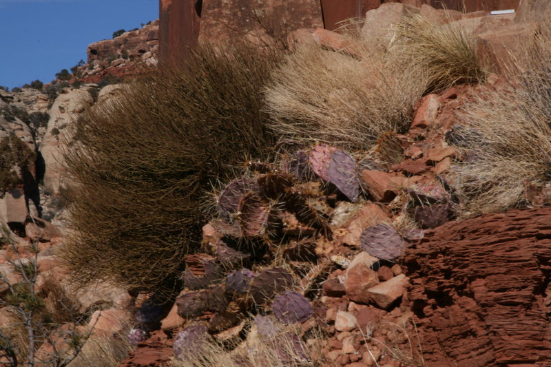 Rock Climbing Photo: cactus and grasses
