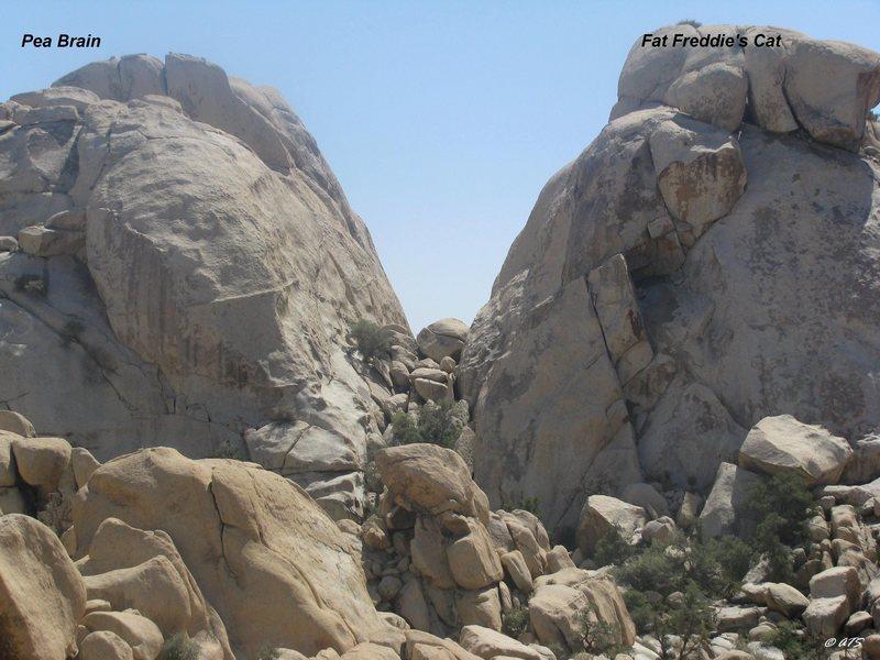 Rock Climbing Photo: Pea Brain