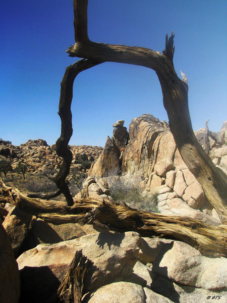 Rock Climbing Photo: It's an artsy kinda thing...
