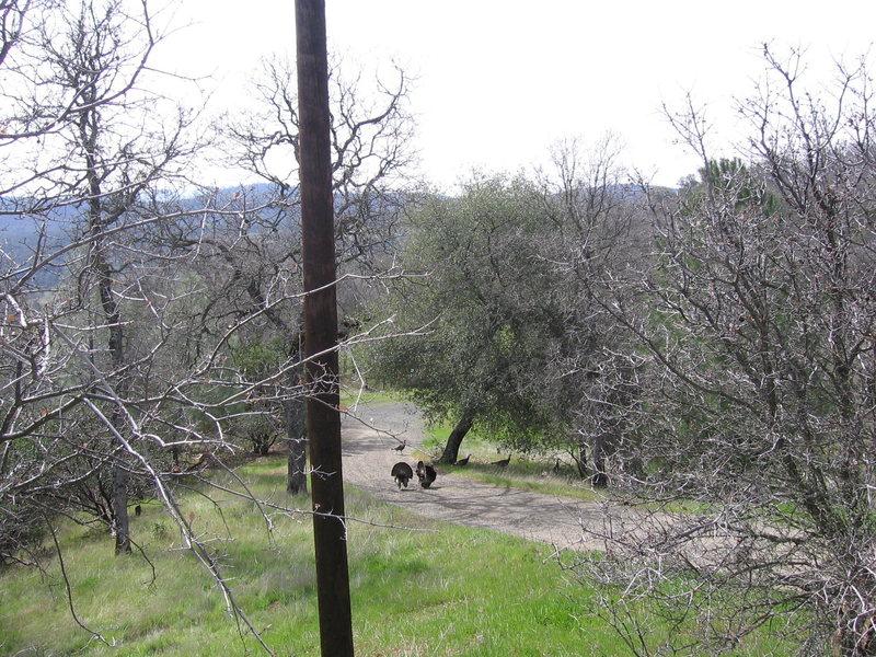 Rock Climbing Photo: jive wild turkeys.