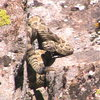 A rattlesnake found near the base of the boulder which gave the boulder it's name.