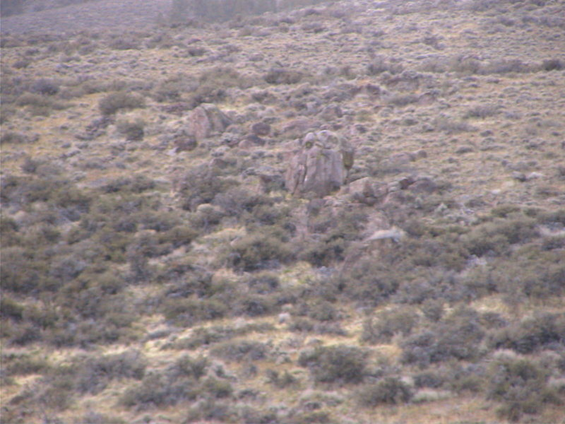 A view from the field of the Hidden in Plain Sight Boulder. Hard to see, but it's there.