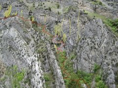 Rock Climbing Photo: Red Lines= Trails and landings Yellow Lines= Route...