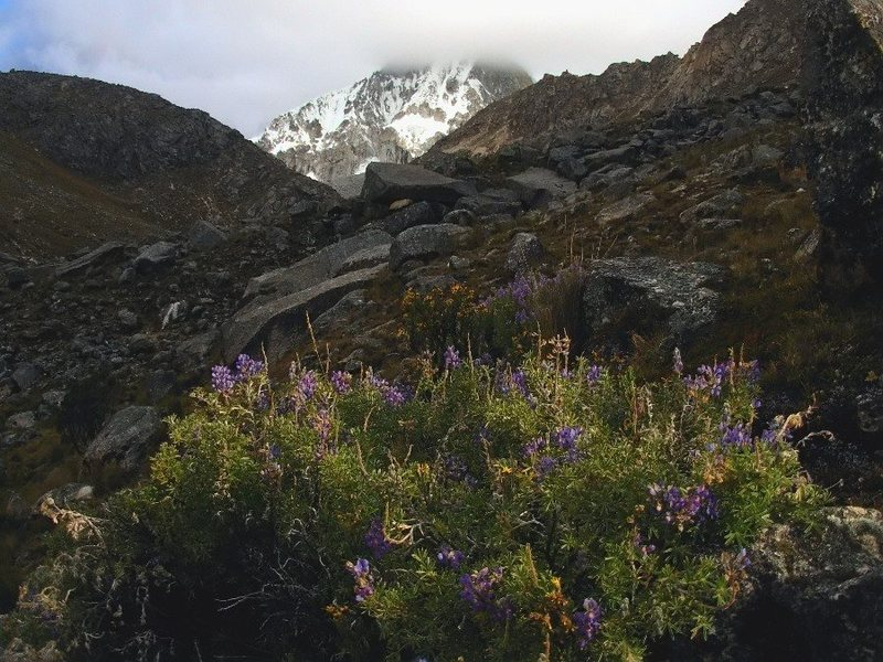 Rock Climbing Photo: Ranrapalca and Lupine.