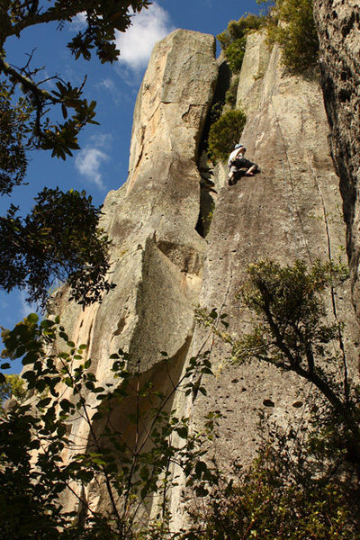 Sayonara climbs the thinning hand-crack running above the tree on the far right side of the photo.